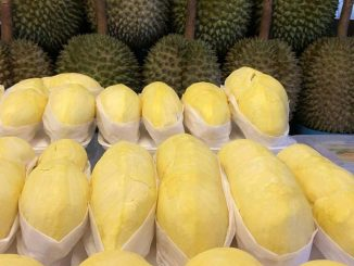 Durian__